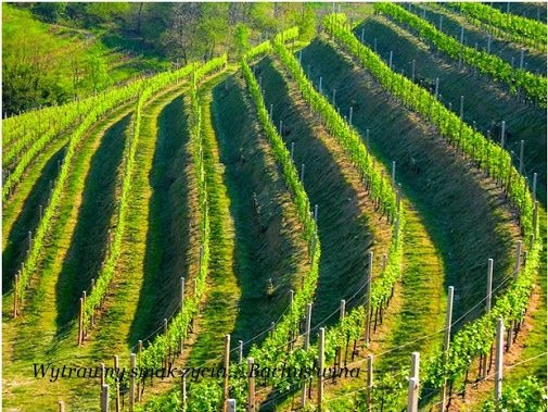 Luccarelli Winery